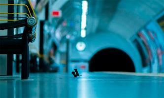 Драка мышей в метро. Реальная фотография или мем?