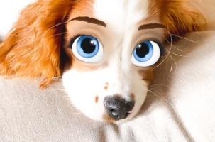 Новый фильтр превращает животных в мультяшных персонажей